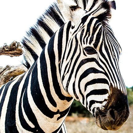 CAMP Rehoboth 2018 African Safari