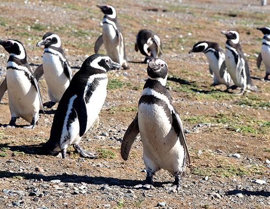 CAMP Cruise-Penguins